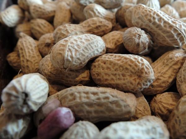 peanut-199591_640